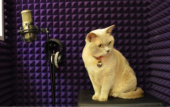 Sly's busy recording vocals for his first album 'Dog Tired'